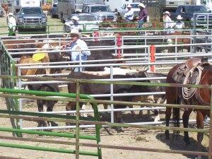 Sorting steers
